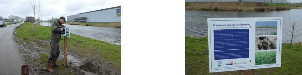 Informatiebord bij oeverzwaluwwand in Bodegraven